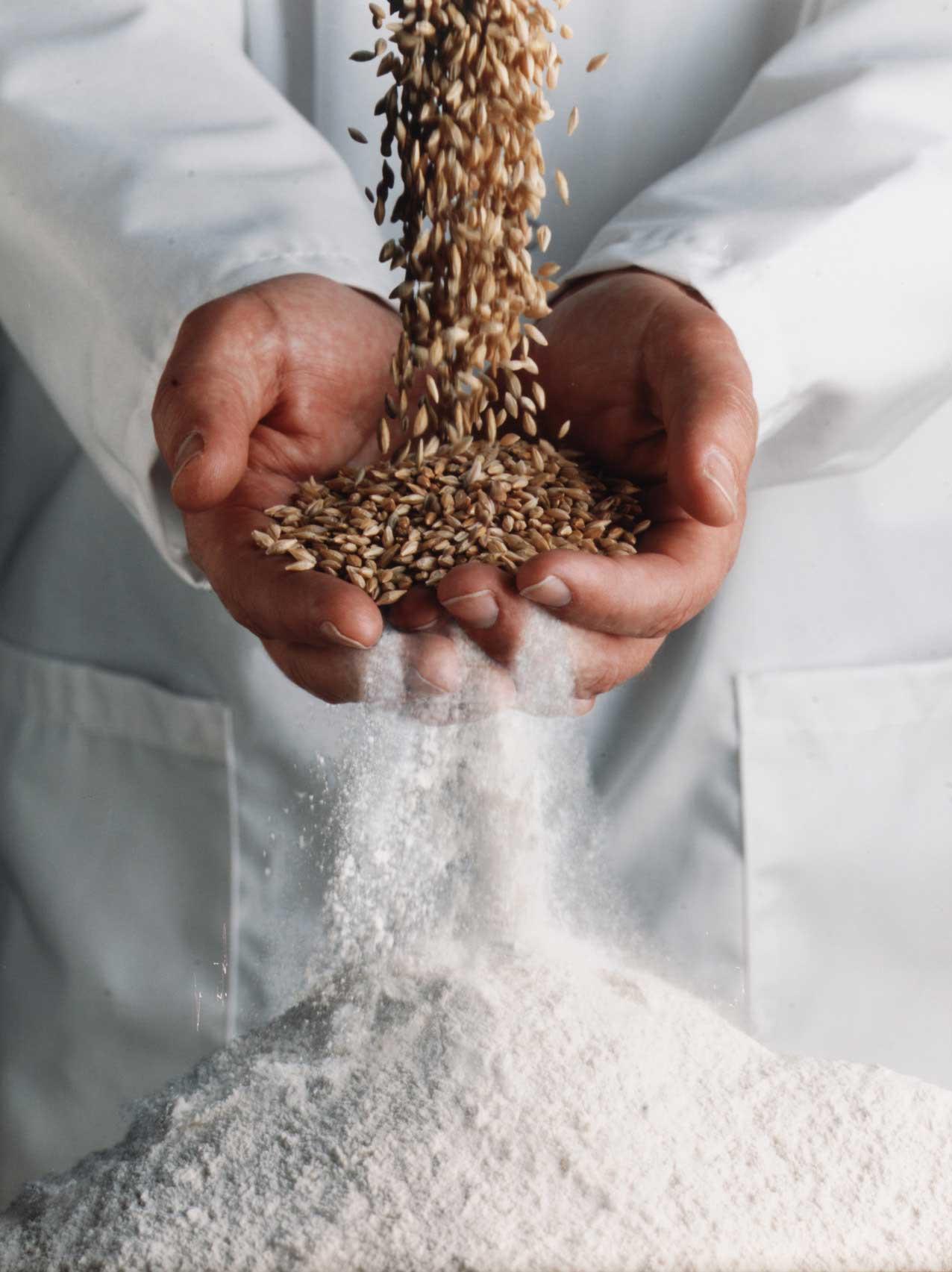 Il grano si trasforma in farina - Molino sul Clitunno